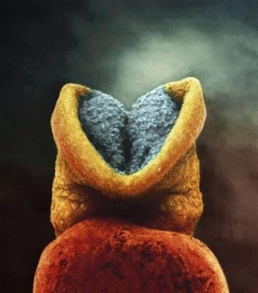الدماغ تبدأ في النمو بداخل الجنين
