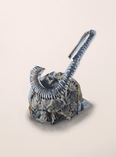 Petite ammonite avec son socle de pierre