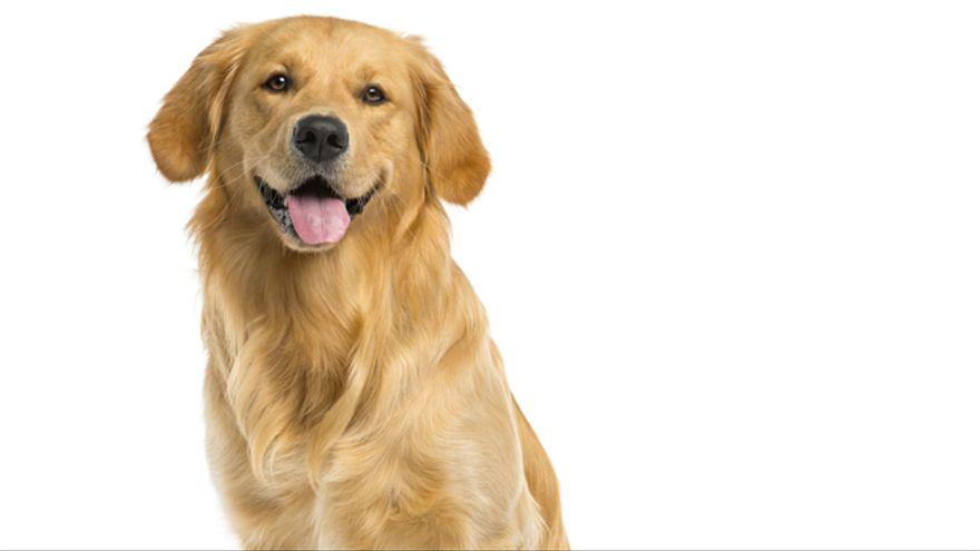 Las 10 mejores razas de perro para convivir con niños
