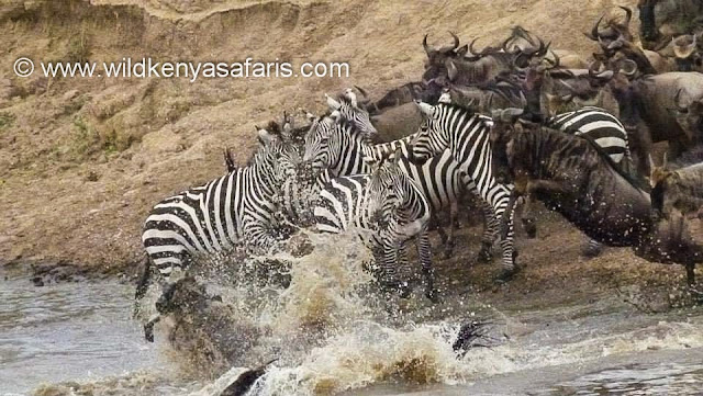 Wild Kenya Safari