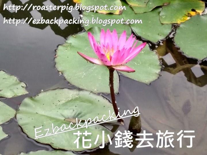 香港睡蓮2021