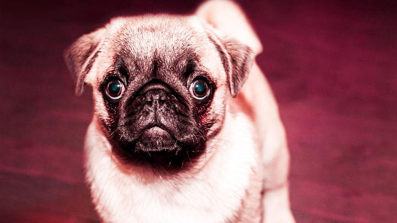 Eye Boogers in Dogs