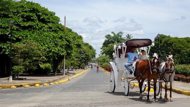 Horses near Parque Azul Granada