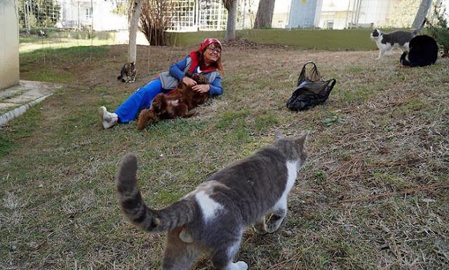 شاهد ماذا فعلت هذه السيدة من أجل قطط الشوارع