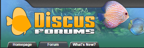 discus forums for blog's feed