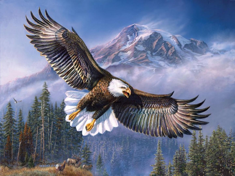 660+ Gambar Burung Elang Paling Keren Gratis Terbaru