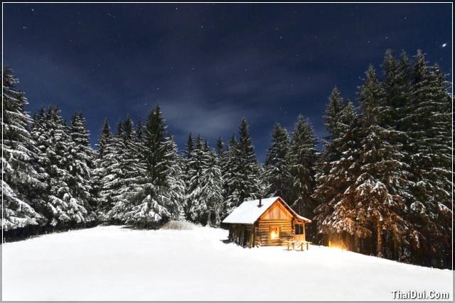 ảnh ngôi nhà và rừng thông mùa đông