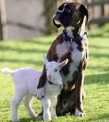 πως να εκπαιδεύσω το σκύλο μου 2