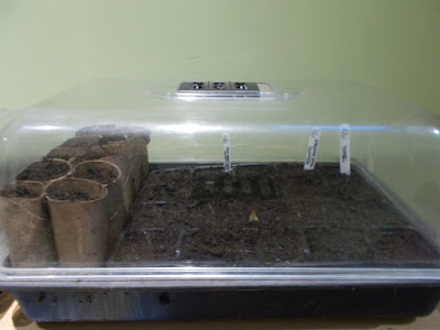 Propagator Sowing seeds indoors 80 Minute Allotment Green Fingered Blog