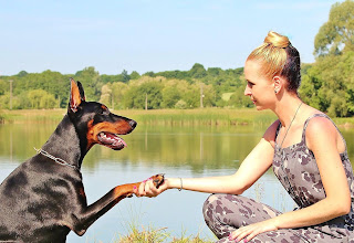 dog obedience - positive dog training