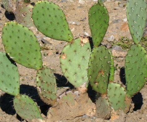 Learning Ideas - Grades K-8: Desert Plant Adaptations