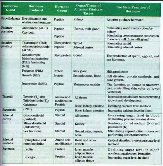 Human Endocrine System ~ New Science Biology