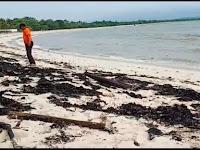 Limbah Cemari Laut Lamsel, Wahrul Fauzi Minta Mabes Polri Usut Pelaku