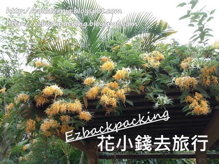 香港忍冬藤