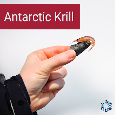 Antarctic Krill contains omega-3 fatty acids EPA, DHA, and phospholipids.
