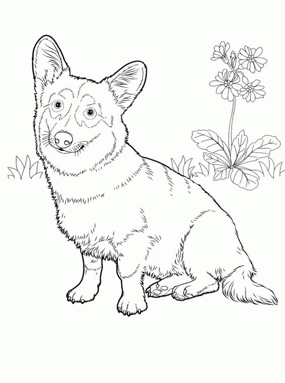 Dogs coloring pages 26