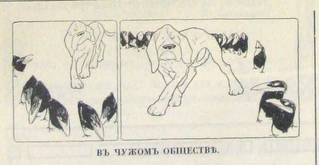 анекдоты о собаках