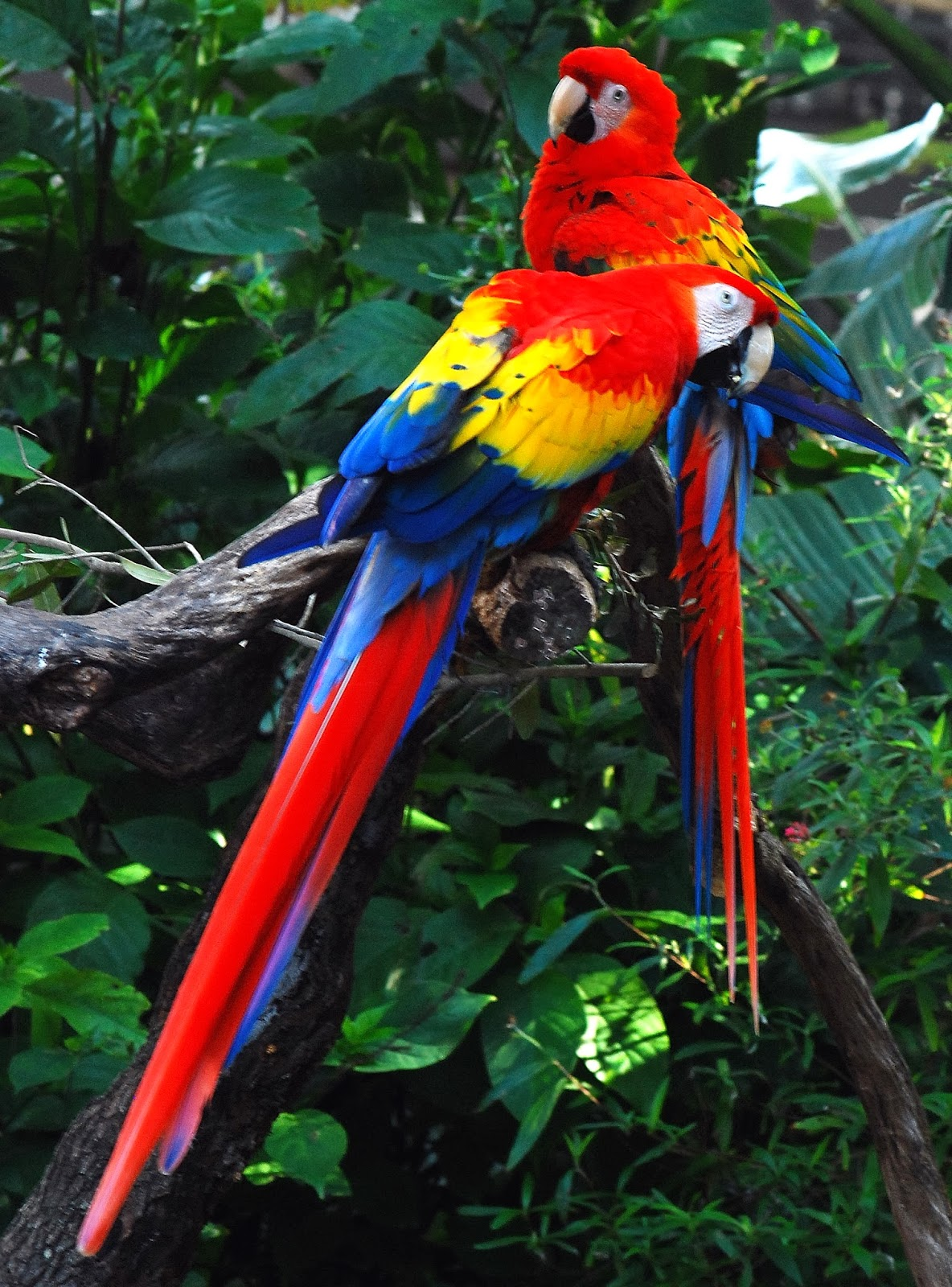 Most Beautiful Parrots Explore Amazing World