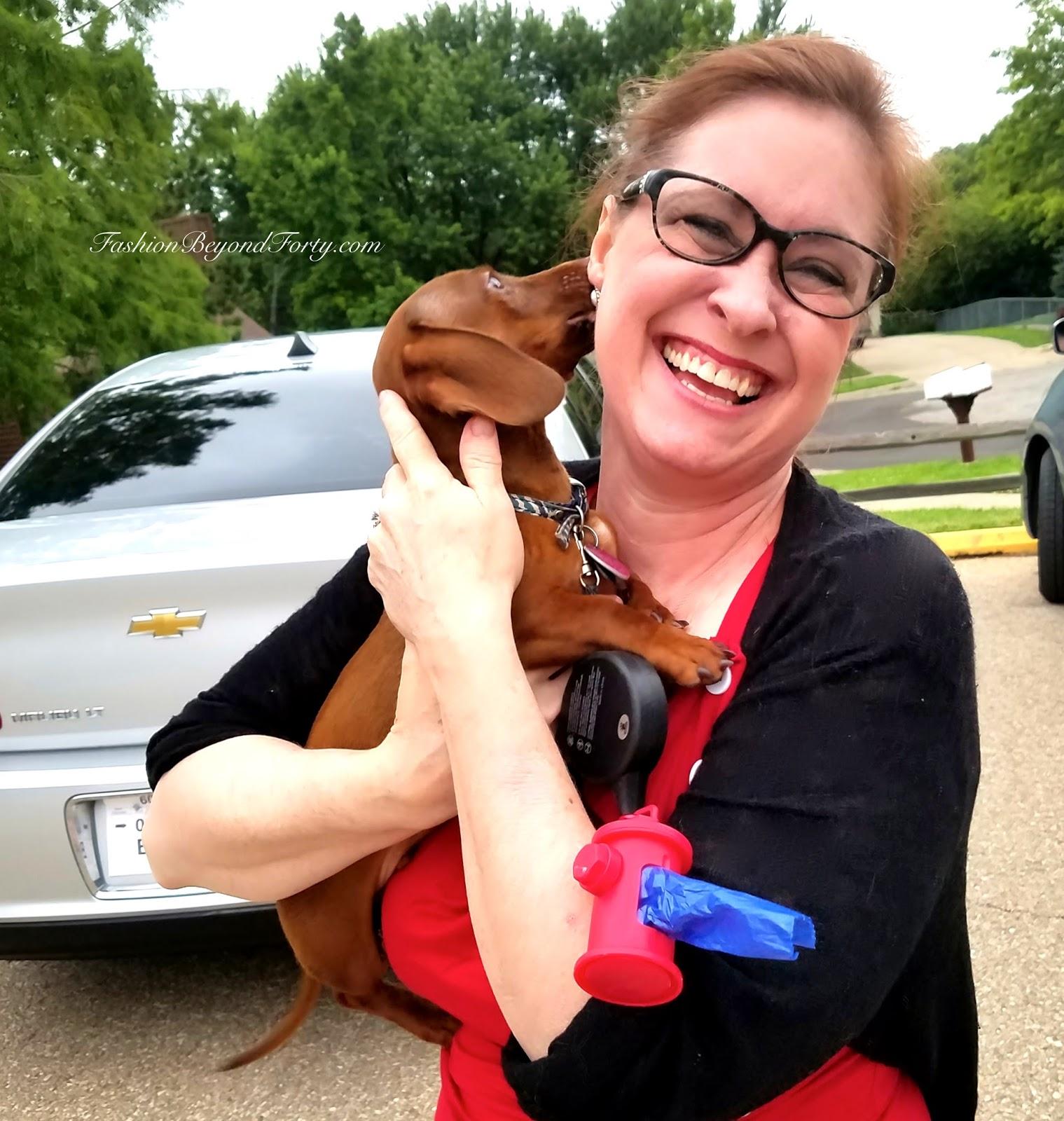 Pet Profile: Link My Grand-Dog, The Christmas Dachshund