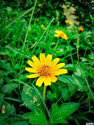 صور الزهور