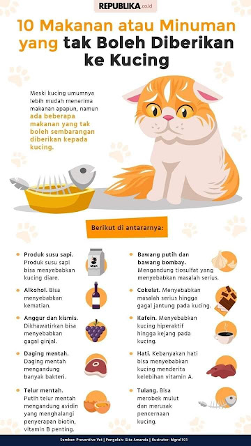 10 makanan yang tidak boleh di beri kepada kucing