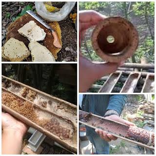 Sarang lebah dari bambu