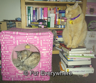 Jewel laying inside her pink kitty cube while Carmine watches over her from a pile of books beside the cube.