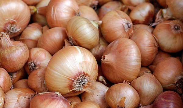 Μειωμένη παραγωγή με καλές τιμές φέτος για το κρεμμύδι στη Λάρισα