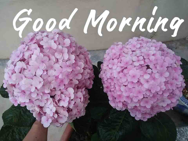 good morning flowers pictures images free download