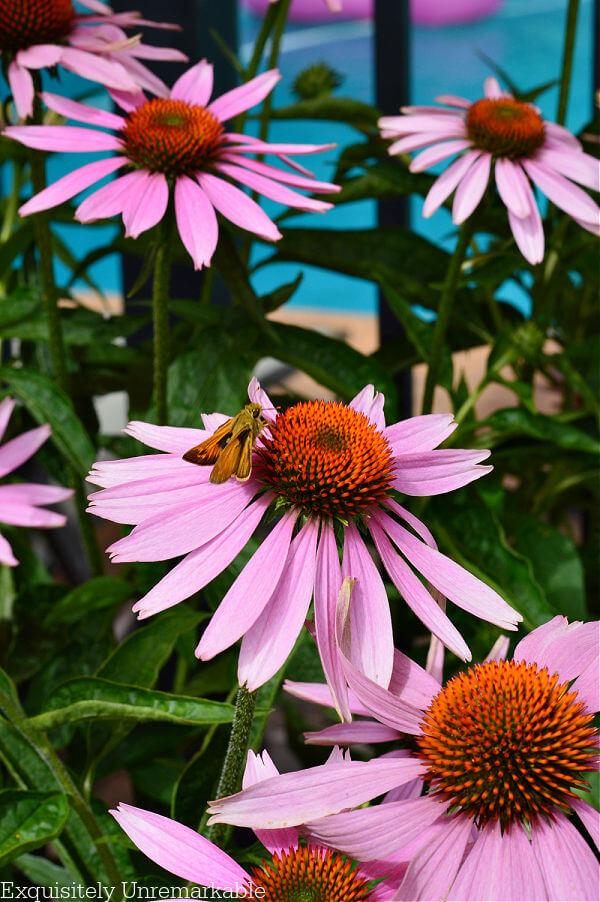 Moth On Flowers