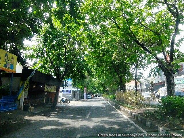 Trees along the roadsides of Surabaya city