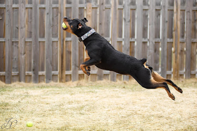 Exercise your Rottweiler