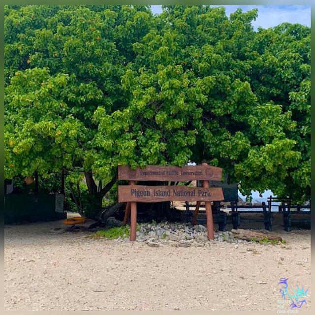 ඔත්තු පරවියන් විසු - පරවී දූපත 🕊🌊 (Pigeon Island National Park) - Your Choice Way