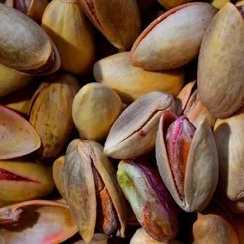 पिस्ता, Pistachio fruits name in Marathi