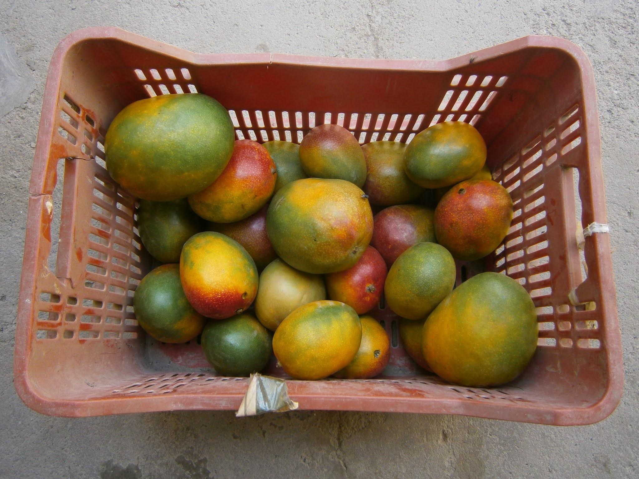 Caja de mangos frescos puestos sobre una caja de plastico