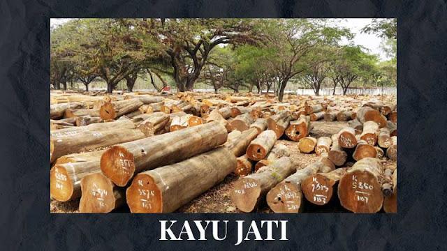 Kayu Jati terbaik