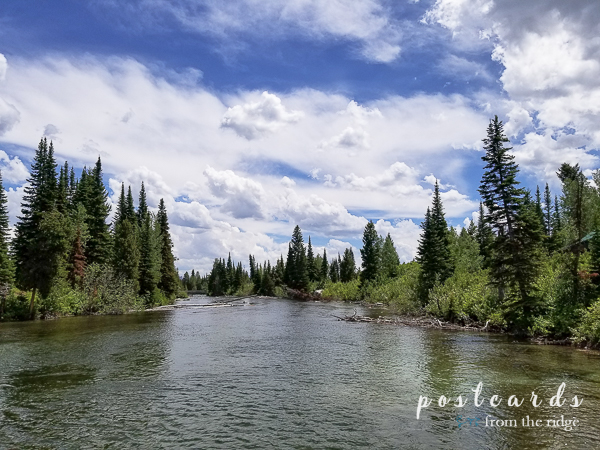 tall pines and river with blue sky and white clouds in Grand Teton National Park