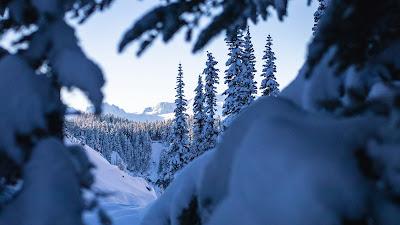 Winter, snow, spruce, trees, nature, landscape
