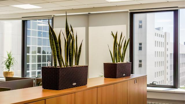Planten die weinig licht nodig hebben of donker kunnen staan en weinig onderhoud vragen en in veel zonlicht verdagen prijzen contract plantenverhuur