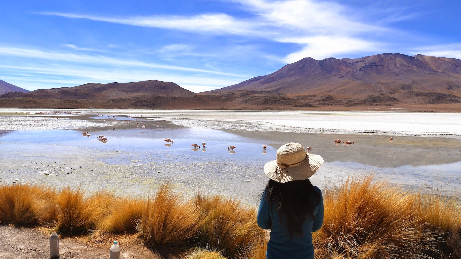 Pink and White Flamingos at Laguna Hedionda, Uyuni Tour, Bolivia