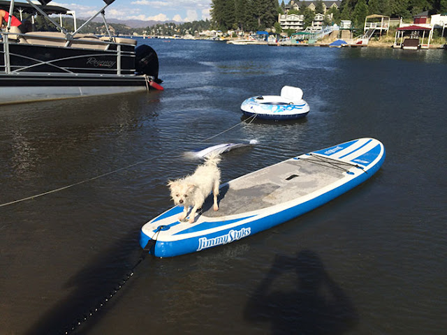 dogs, paddleboards, lake arrowhead