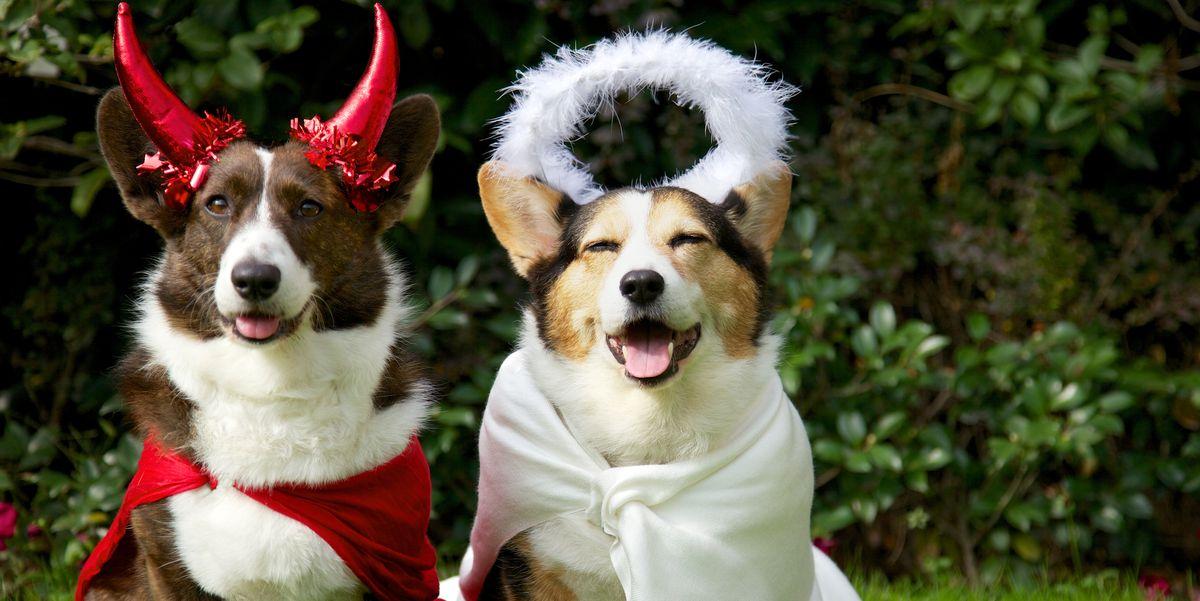 Halloween Pet Costume| Dog Costume: