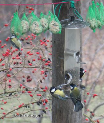 birdwatching, escursioni, pic-nic, riconoscimento erbe spontanee e mangerecce, rose, lavanda, confetture artigianali, sali aromatizzati, oleoliti e ghirlande