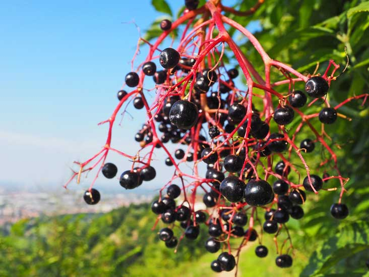 Why should you consume berries