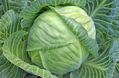 Cabbage packing