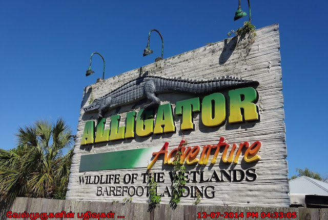 Alligator Adventure Wild Life of the WetLands