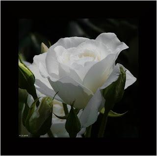 EL LÍMITE EN LAS RELACIONES CON LOS DEMÁS (LA TOLERANCIA)  Jaime-la-rose-a31223167
