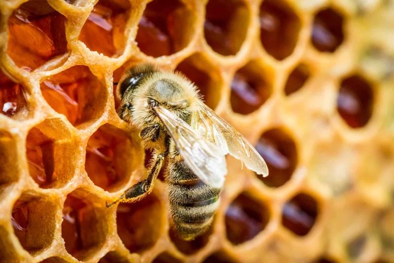 Bal arılarının demokrasi kültürüne hayran olacaksınız