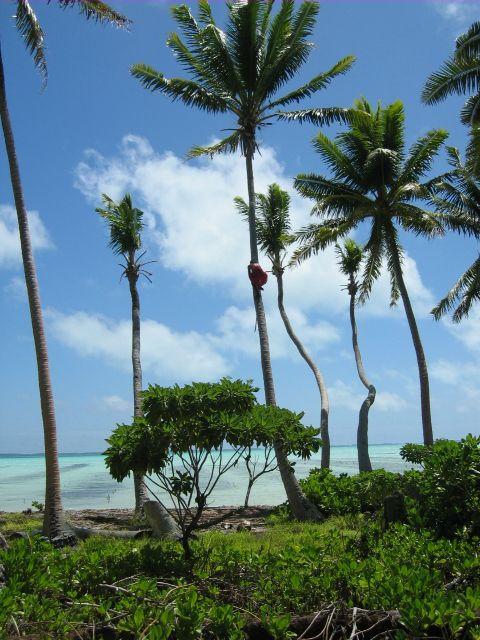 Kiribati, outra ilha que o alarmismo condena ao desaparecimento, mas cresce