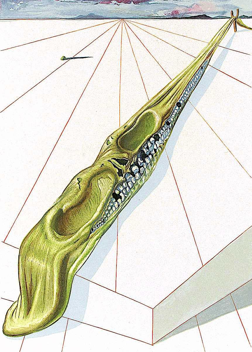 Salvador Dali, a stretched skull